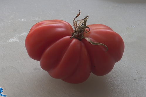 The Zapotec tomato, Solanum lycopersicum is a fantastic tasting tomato! The fluting on the tomato brings in an old world toma