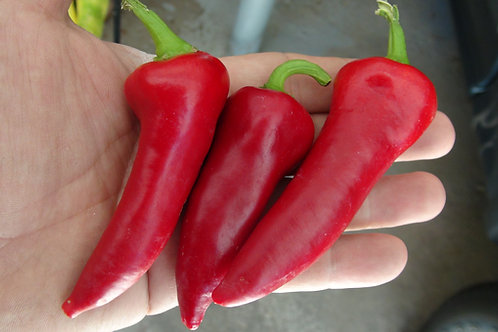 Here is the Kovin Pepper, Capsicum annuum, Scoville units: 000 SHU. This pepper originates from the town of Kovin (Ковин) in