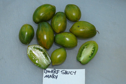 Here is the Dwarf Saucy Mary Tomato , Solanum lycopersicum. This tomato originates from the USA and was created and stabilize