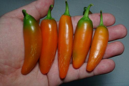 Here is the NuMex Orange Spice Jalapeno Pepper, Capsicum annuum, Scoville units: 1,100 to 10,000 SHU. This peppers originates