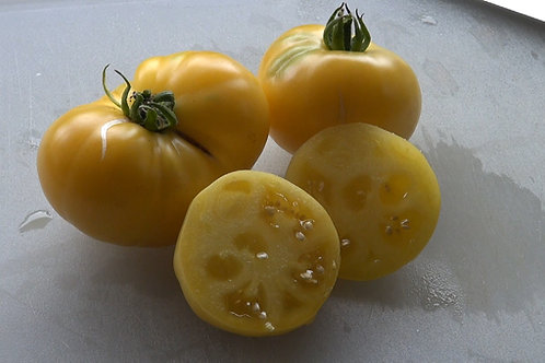The taxi tomato is one of best golden yellow variety for short season areas. Bright an yellow 4 to 8 oz. fruits are smooth an