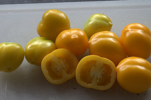 Here is the Plum Lemon Tomato, Solanum lycopersicum. This Plum Lemon Tomato was Collected by Kent Whealy from an elderly seed