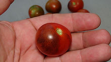 Here is the J&L Midnight Select Tomato, Solanum lycopersicum. This tomato originates from Española New Mexico, USA. The fruits are a compari sized black-dark orange skinned, deep red globe type tomato getting to about 2 inches round and weighting over a 4 oz. The thing about this variety is the deep red flesh inside and almost being seedless! Plants can get to 4 feet tall in really good soil but plants tend to get to 3 feet tall. Great for salads, slicing and for tomato sauce! Open pollinated Indeterminate regular leaf 70-85 days.