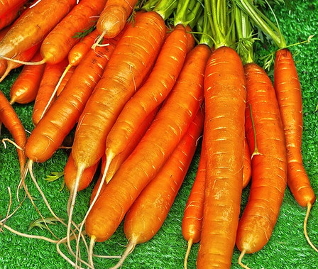 Here is the Nantes Coreless Carrot, Daucus carota subsp. sativus. It is a bright orange carrot root with an average size of 6 inches in length and up to 1.5 inches in diameter. It was first mentioned in 1885 and has sparse foliage with a cylindrical and short blunt tip. They are brittle but crunchy and high in sugar. They don't store as well in the open as other verities but are much better when freezing them. Nantes is a great tasting, tender but crisp carrot witch make a great juicing carrot and is our top choice for juicing. Open pollinated 60 to 70 days for root harvest and 2 years for seeds.