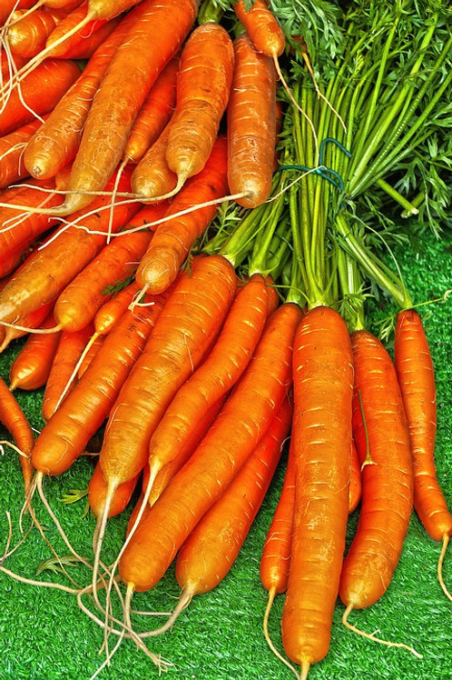 Here is the Nantes Coreless Carrot,Daucus carota subsp. sativus. It is a bright orange carrot root with anaverage size of 6