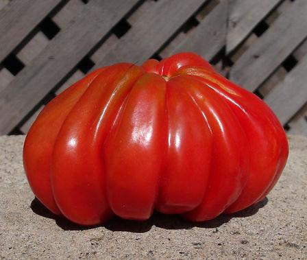 Pink Accordion Tomato