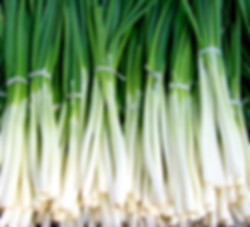 Evergreen Scallion