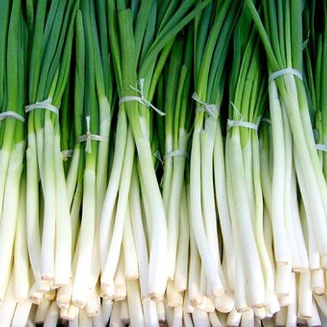 Here is the Evergreen Scallion,Allium fistulosum.They are also be called green onions or bunching onions. This particular v