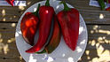 Here is the Carmen Pepper, Capsicum annuum Scoville units: 000 SHU. It is a Sweet Italian Pepper you can grow on the porch or balcony as well as in the vegetable patch! Just 28 inches high and about 16 inches wide, these plants are so compact they will fit in anywhere, yet a very  heavy producer and delicious. They won a 2006 All-America Selection! The peppers are horn-shaped, with wide shoulders and a tapering body. A must grow for all gardeners! Open pollinated 80 days.