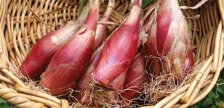 Red of Florence Onion