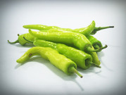 Here is the Hungarian Yellow Wax Pepper, Capsicum annuum, Scoville Units: 1,000 to 15,000 SHU. This Heirloom Pepper variety is often seen in grocery stores but is not the same thing. The Hungarian peppers seen in stores are a commercial variety. They go from a lime green to yellow then to red or crimson when mature. Heat on them canrange from low to moderately hot but we haven't found them to be to much hotter then a mild jalapeno. Pods range from 4 ~ 6 inches long. Plants are good producers and get to around 24 inches but can get to 30 inches in good soil. Makes a great house plant when pruned. Open pollinated over 70 days.