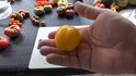 Here is the Plum Lemon Tomato, Solanum lycopersicum. This Plum Lemon Tomato was Collected by Kent Whealy from an elderly seedsman at Moscow's Bird Market during the August 1991 coup. Originally from the Saint Petersburg area, Thisvery firm lemon shaped 2 inch fruitwith it's vivid yellow skin and mild lemony flesh is quite a heavy producer. It is considered a hollow tomato making it a good choice for a tomato sauce. Excellent in vegetable soup and for stuffing like a stuffed pepper!Plants get to over 4 feet tall with as many as 6 fruits per bract. Indeterminate, Open pollinated 75 days from transplant.
