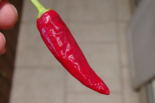 Here is the Large Goat's weed Pepper, Capsicum annuum, Scoville units: 1,000 to 10,000 SHU. The Large Goat's weed Pepper orig