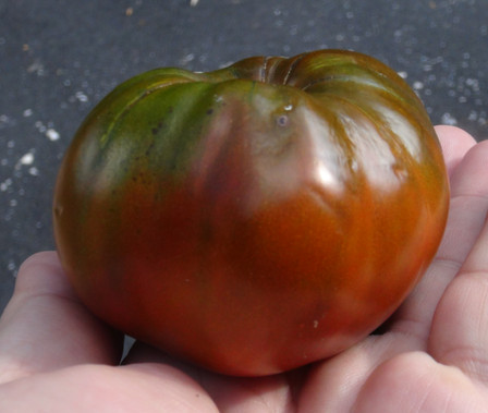 "Here is the Brown Tomato, Solanum, lycopersicum. We received this tomato seed as ""brown tomato"" and that is all we know about it but we do think its from the Baltic region. This particular type of beefsteak tomato is brown and has a very mild flavor. This seems to be a low acid type and melts in your mouth! Plants tend to get about 4 feet tall and is a heavy producer and makes a great salad tomato! Open pollinated. Indeterminate, 75 days."