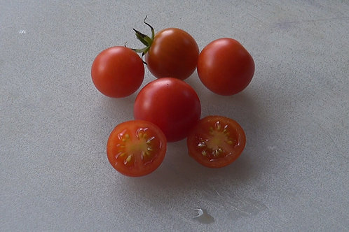 Here is the Sweet 100 Tomato, Solanum lycopersicum, The Sweet 100 tomatoes are cherry tomatoes and are about one inch round a