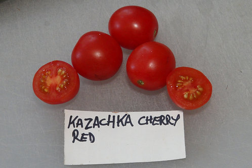 Here is the Kazachka Cherry Tomato, Solanum lycopersicum. This tomato originates from the country of Russia. It is considered
