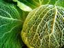 Aubervilliers Cabbage