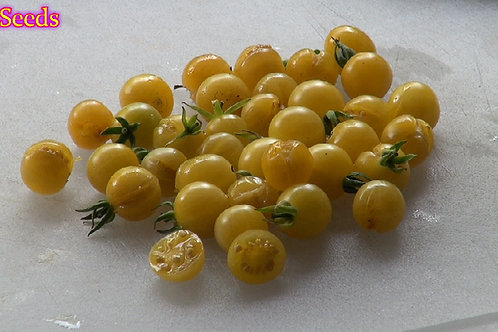 Here is the Yellow Pimp Tomato, Solanum pimpinellifolium. We received the seeds to this tomato from a seed trade from someone