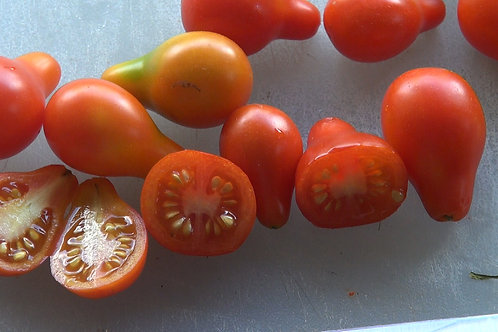 The red cherry pear tomato, Solanum lycopersicum is one of the oldest heirlooms known. This cherry tomato, The Red Pear tomat