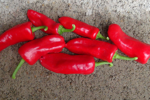 Here is the Mari Poivre Pepper, Capsicum annuum, Scoville units: 7,000 ~ 10,000 SHU. Also known as the Mari Pepper, This very
