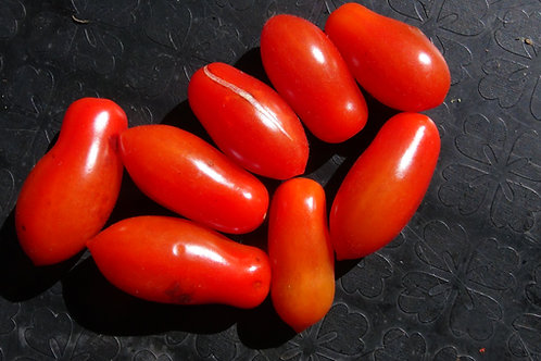 Here is the Mini San Marzano Tomato, Solanum lycopersicum, new for 2020. This regular-leaf grape sized tomato is a commercial
