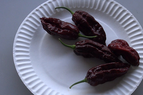Here is the Brown Bhutlah, Capsicum chinense Scoville units: 1,800,000+ SHU. Itwas created by Peter Merle who is a long time
