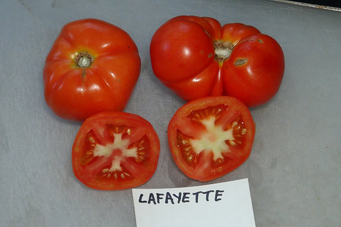 Here is the LaFayette Tomato, Solanum lycopersicum. This tomato originates from the USA and comes from the Donald Branscomb c