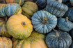Here is the Jarrahdale Pumpkin, Cucurbita maxima. This medium sized blue pumpkin originates from New Zealand and has a blueish-gray-green skin with a orange flesh inside! They can range in color from a light blue to slate gray with heavy ribbing. Getting to around 6 to 12 Lbs and 16 inches in size, plants can make as many as 8 per plant. These pumpkins can sit on the shelf for months before going bad! They are edible and make a great pumpkin pie. seeds are also really good roasted. Plants can get to 15 feet long and are considered a high heat loving variety. They are a eye catchy pumpkin for sure!. Open pollinated. 80 to 100 days.