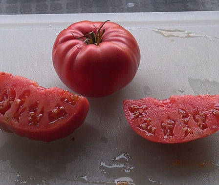 Here is the Dinner Plate Tomato, Solanum lycopersicum, This large red beefsteak tomato is known for producing tomatoes as large as 5Lbs! Meaty Fruit type tomato with red-orange color an heavy production. These tomatoes can get to about 1 to 3 pounds. They are crack-resistant with smooth skinned fruits and a nice balance of sweet and tangy flavor witch makes a great tomato sauce.  They are Mid-season, indeterminate, regular leaf type tomato variety. Resistance to fusarium wilt and verticillium wilt. Open pollinated 80 days.