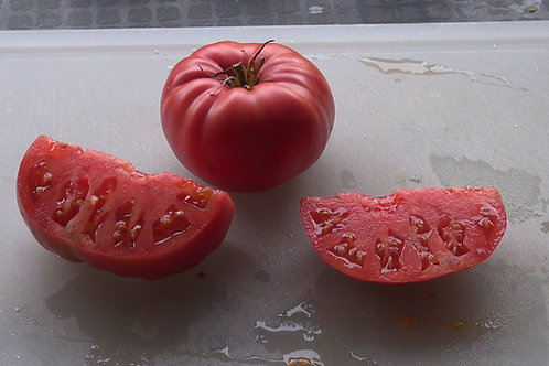 Here is the Dinner Plate Tomato, Solanum lycopersicum, This large red beefsteak tomato is known for producing tomatoes as lar