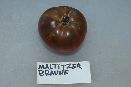 Here is the Maltitzer Braune Tomato aka Brown Maltitzer Tomato, Solanum lycopersicum. This tomato originates from Germany and