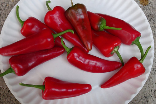 Here is the Honeypeno Pepper,Capsicum annuum, Scoville units: 000 SHU. This pepper was created by Pepperlovers and is said t
