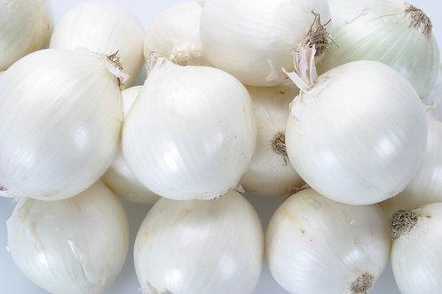 Barletta Pearly White Onion