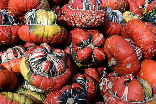Here is the Turk's Turban Gourd,Cucurbita maxima.It is named so because it looks just like a turban that is often worn in t