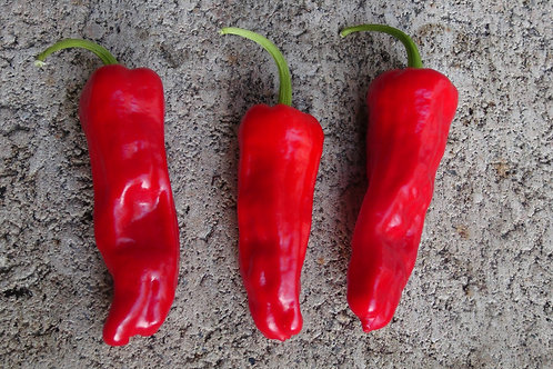 Here is the Greek Pepperoncini Pepper, Capsicum annuum, Scoville units: 100 ~ 600 SHU. This variety originates from Greece bu