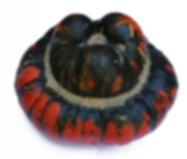 Turk's Turban Gourd