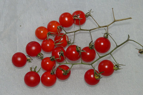 Here is the Red Currant Tomato .25 cent addition, Solanum lycopersicum. This tomato originates from a seed trade in and start