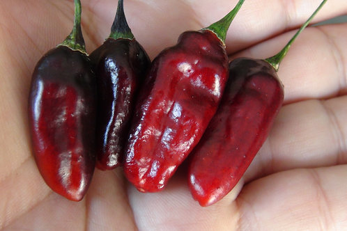 Here is the Kathumby Black Pepper, Capsicum Chinense, Scoville units: about 5,000 ~ 40,000 SHU. Theirs not much known about