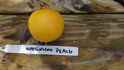 Here is the Wapsipinicon Peach Tomato, Solanum lycopersicum, which was named after the Wapsipinicon River in Iowa.This Fuzzy, Light, creamy yellow, almost white fruit has a superb taste and texture! In 1890, it was introduced and originated by Elbert S. Carman and was known then as White Peach. Dennis Schlicht renamed it later on to Wapsipinicon peach tomato. The taste is complex, with its spicy, sweet and very fruity flavor. The fruits are small, around 2 inches round with the skin being slightly fuzzy like a peach! Open pollinated Indeterminate, 80 days.