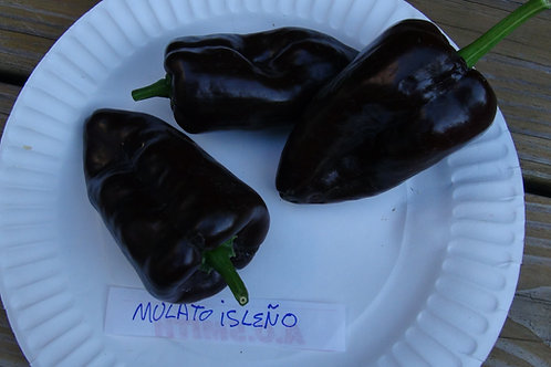 Here is the Mulato Isleno Pepper, Capsicum annuum, scoville units:1000 ~ 2000 SHU.This pepper originates from Mexico and is