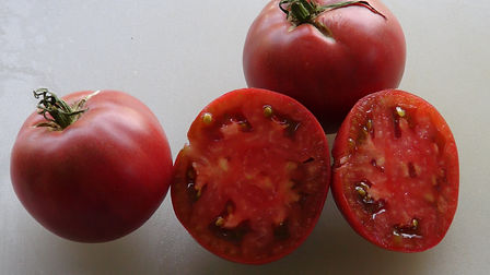 Here is the Cherokee Purple Tomato, Solanum lycopersicum. Itis an old Cherokee Indian heirloom, pre 1890 variety. A beloved heirloom as valued for it's flavor and it's unusual look, Cherokee Purple sets giant beefsteak tomatoes weighing up toa pound and filled with intense violet-purple hues. This is a true legacy varietybelieved to have originated more than 120 years ago in the Cherokee nation in Tennessee. Open pollinated Indeterminate 70 days.