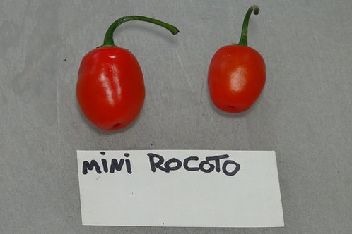 Here is the Mini Rocoto Red Pepper, PI 387838, Capsicum pubescens, Scoville units: 500 to 4,500 SHU. This peppers originates