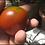 Here is the Black Prince Tomato, Solanum lycopersicum. This tomato originates from Irkutsk in Siberia Russia. This tomato has