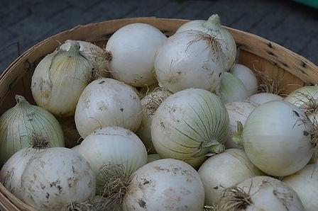 Southport White Globe Onion