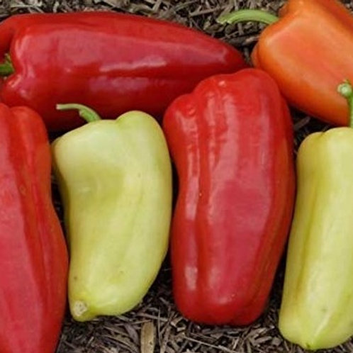 Here is the Gypsy sweet Pepper, Capsicum annuum, Scoville units: 000 SHU. The Gypsy sweet Pepper originates from the USA and
