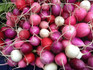 Here is the Purple Plum Radish,Raphanus sativus. It is a light purple almost dark pink radish that has a slight sweet crispy radish flavor. The skin is purple with a white flesh inside and get to 3/4 to 1 inches in size. They are a mild type but we found that every so many will be a bit more spicythen others. These are great in salads! Radishes can be useful as companion plants for many other crops, probably because their pungent odor deters such insect pests as aphids. This is a great starter vegetable for new gardeners. Open pollinated, about 40 days.