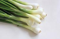 White Lisbon Bunching Onions