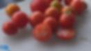 Glacier tomato