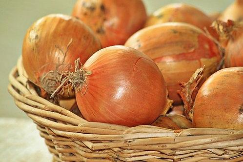 Yellow of Parma Onion