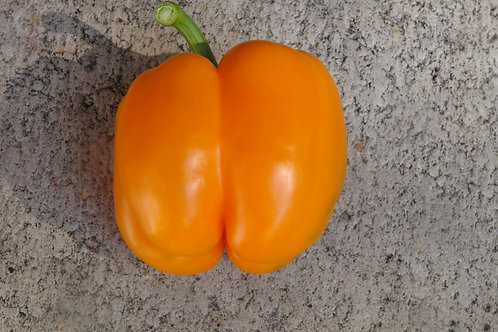 Here is the Orange Sun Bell Pepper, Capsicum annuum, Scoville units: 000 SHU. This bell pepper originates from the USA andis